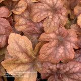 秋植えおすすめの4つの理由